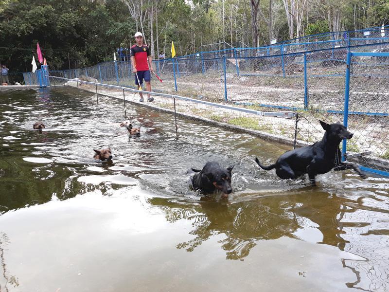Những chú chó xoáy ở trang trại Thanh Nga được huấn luyện hết sức bài bản.