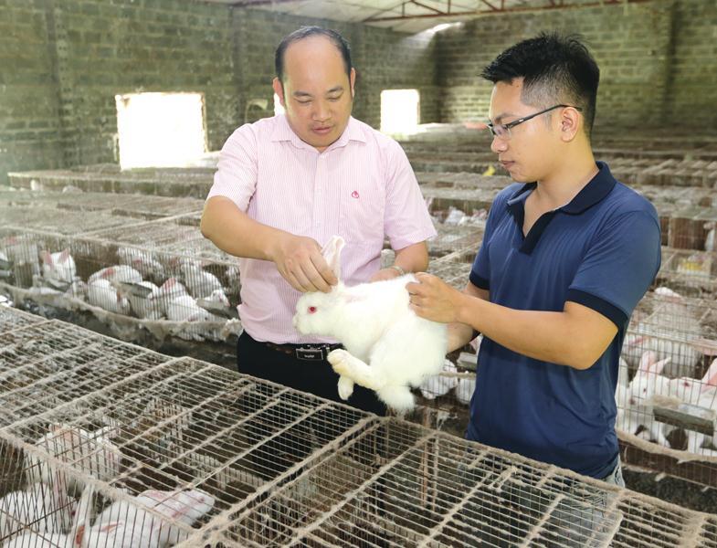 Nhờ nguồn vốn tín dụng chính sách, người dân nghèo ở Ninh Bình có cơ hội chuyển đổi cây trồng và hướng đến chăn nuôi.