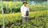 Doanh nhân Ngô Văn Mười, chủ 4 cơ sở sản xuất cây giống tại Chợ Lách (Bến Tre): Làm giàu từ cây giống qua bán hàng online