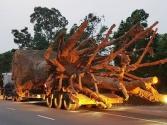 """Công an Thừa Thiên Huế thông tin chính thức vụ 3 """"siêu cây"""""""
