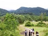 Huyện A Lưới - Thừa Thiên Huế: Có sẵn 40 ha dành cho nhà đầu tư thực hiện dự án nuôi bò vàng